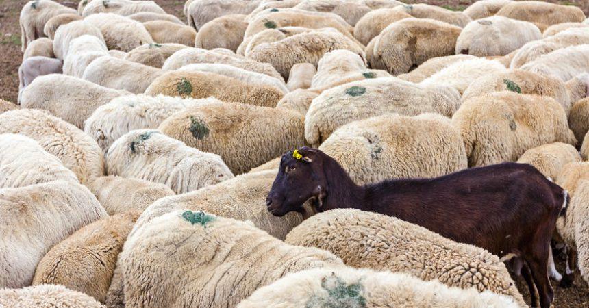 El padre de Nadia: que una oveja negra no nos haga descuidar el rebaño